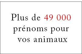 Choisir un prénom pour votre animal (49 000 prénoms)