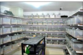 Systéme et mode d'élevage des hamsters