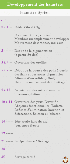 Chronologie du developpement chez le hamster roborovski