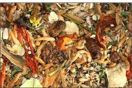Pourquoi les mélanges de graines sont ils dangereux pour les hamsters et autres rongeurs omnivores (rats, souris, hamsters)