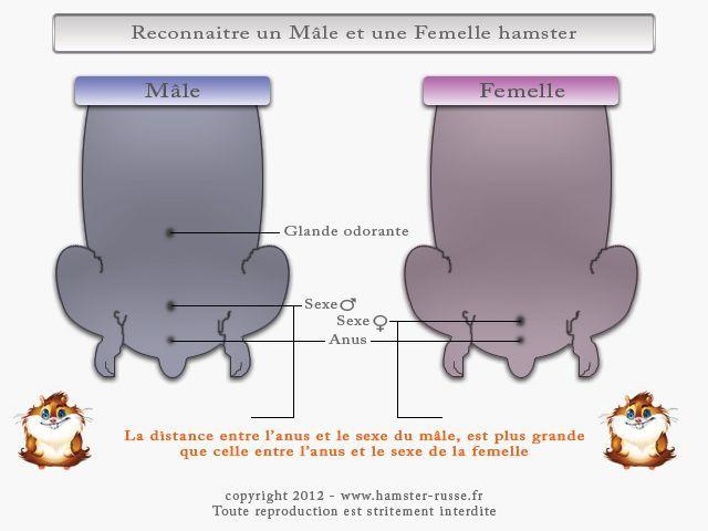 photos de sexe le sexe de hamster