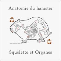 Prix hamster roborovski animalerie