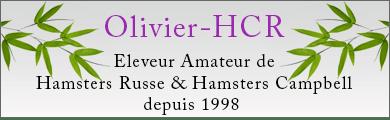 Eleveur amateur de hamster russe et hamster campbell