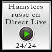 Hamster russe en direct live 24h sur 24
